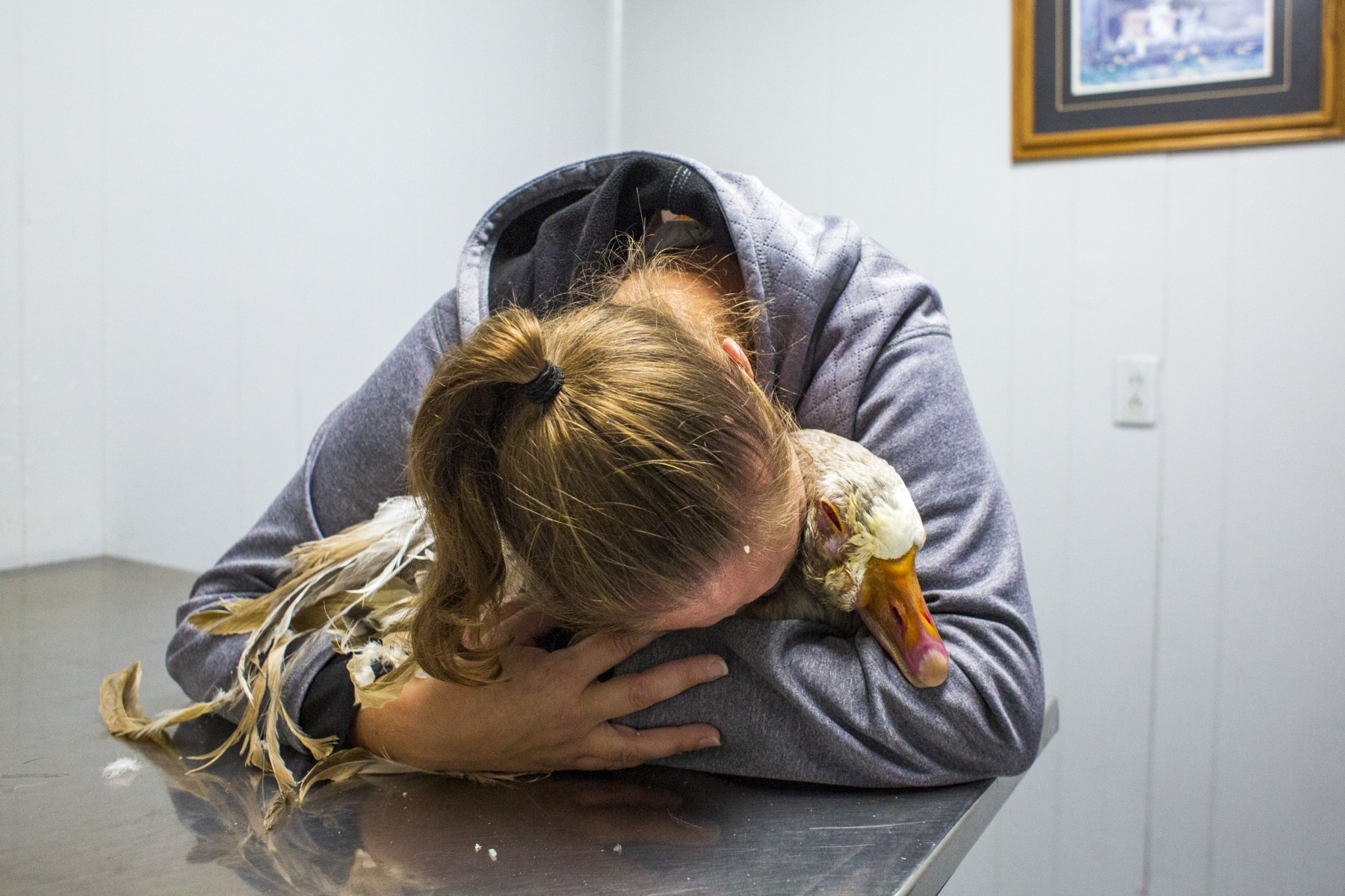 """Denise Andrews cries over her pet goose, Mick, before he is put down at the Harrison County Veterinary Clinic in Cynthiana, Ky. on October 31, 2019. Just minutes before, Mick was diagnosed with a malignant tumor on his face. """"I hate to put anything down,"""" Denise says."""