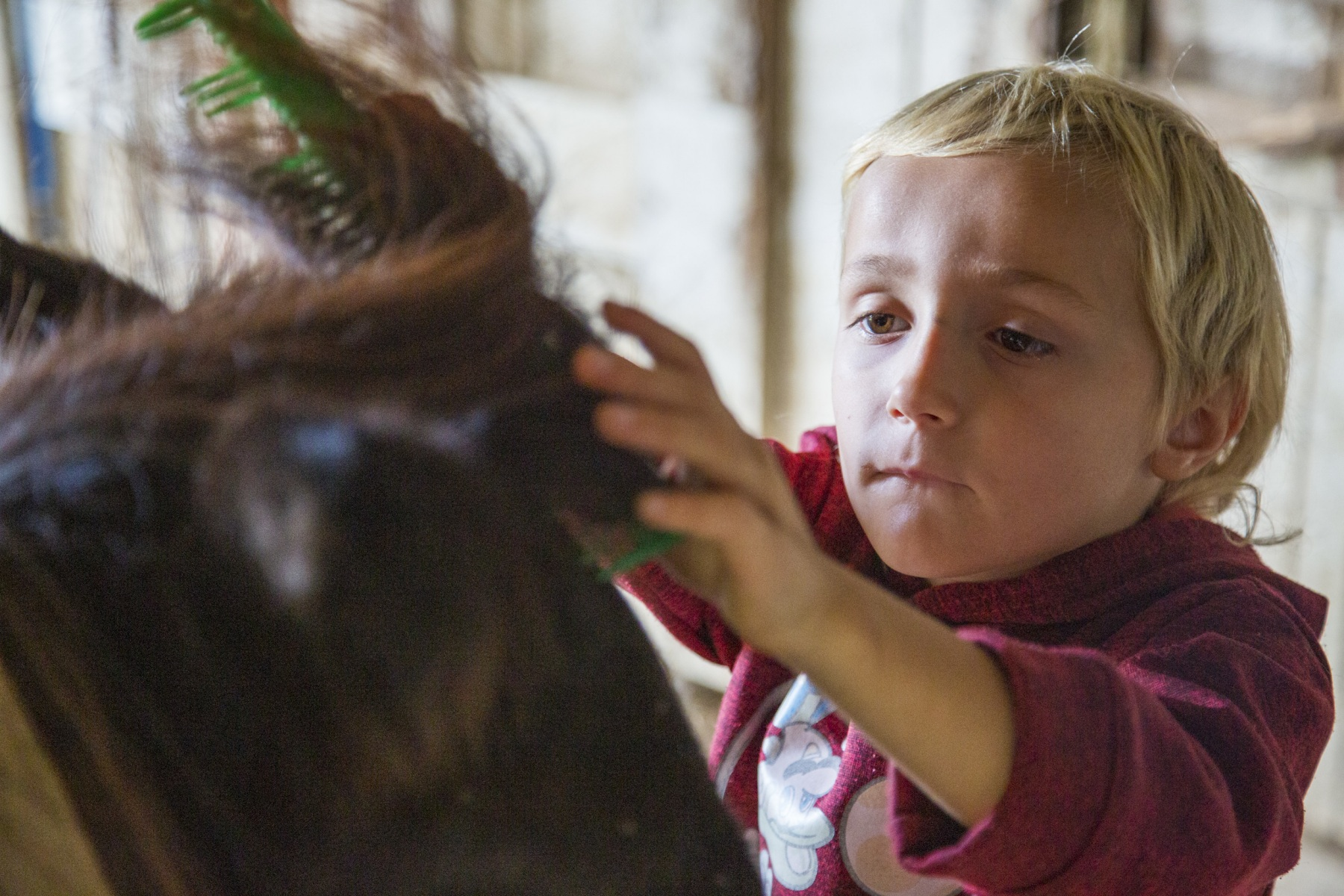 Jack, 6, combs a pony's mane on a family horse farm in Chesterhill, Ohio on September 14, 2020. Jack and his two older sisters come to the farm for free horseback riding lessons while they are not attending school in-person during the COVID-19 pandemic.